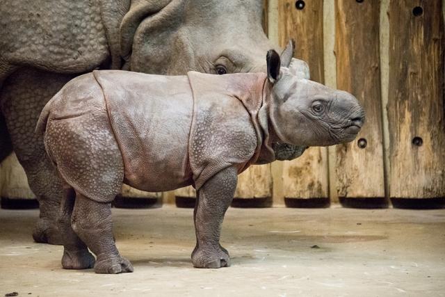 Neuer Einwohner im Nyíregyháza Zoo 😊 – Eine zoologische Sensation! post's picture