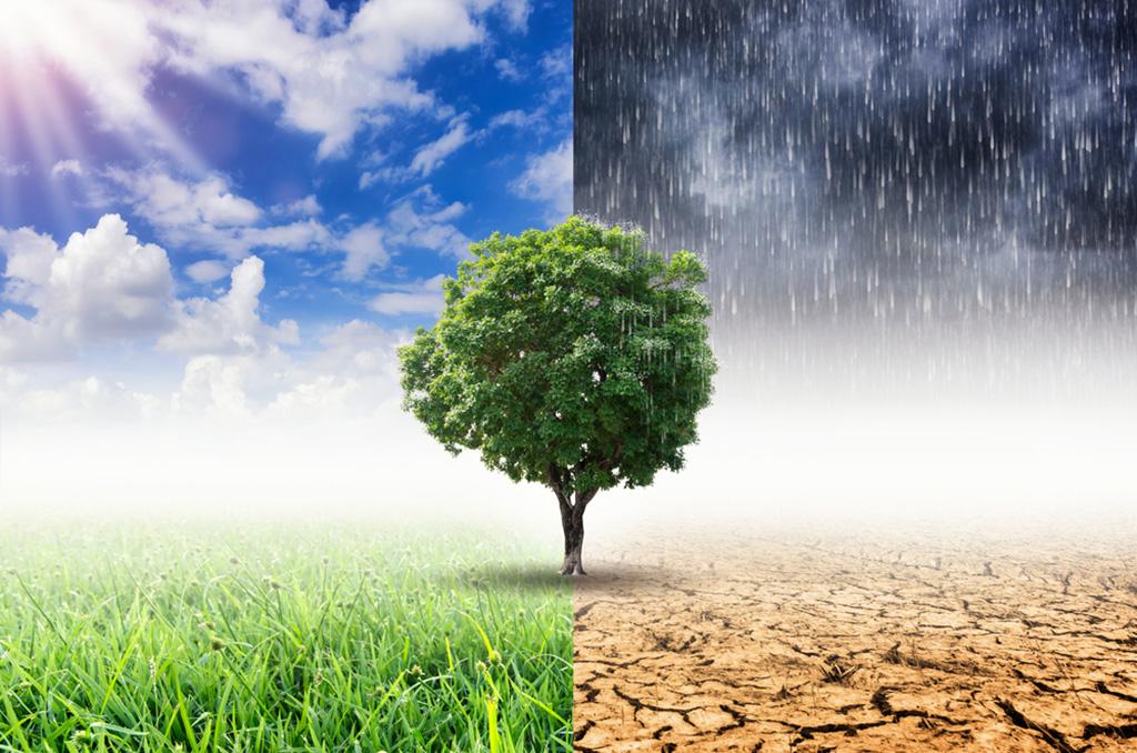 E. Sylvester Vizi: Die Menschheit vergiftet nicht nur die Natur, sondern auch sich selbst
