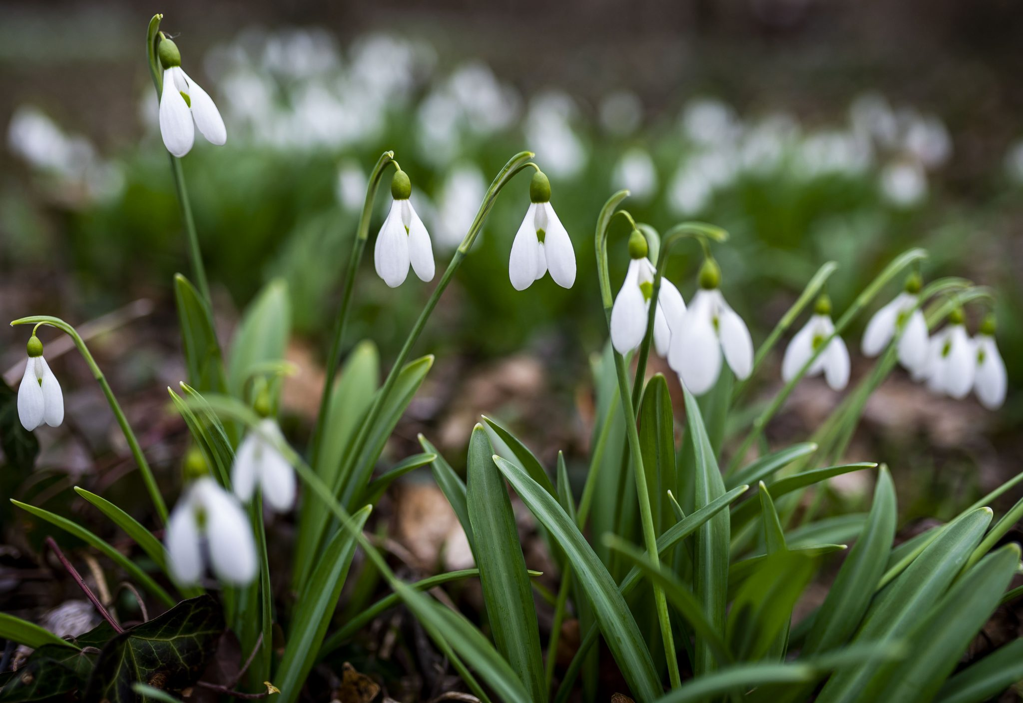 Ungarn verabschiedet sich vom Winter und begrüßt den Frühling post's picture