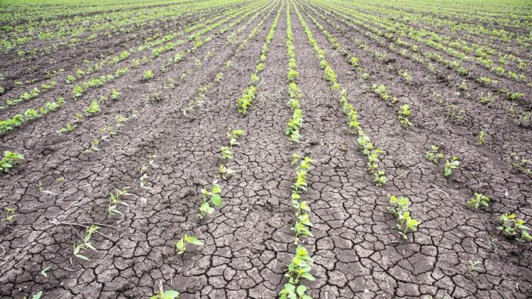 Dürre herrscht in Ungarn – Lebensmitelpreise können steigen post's picture