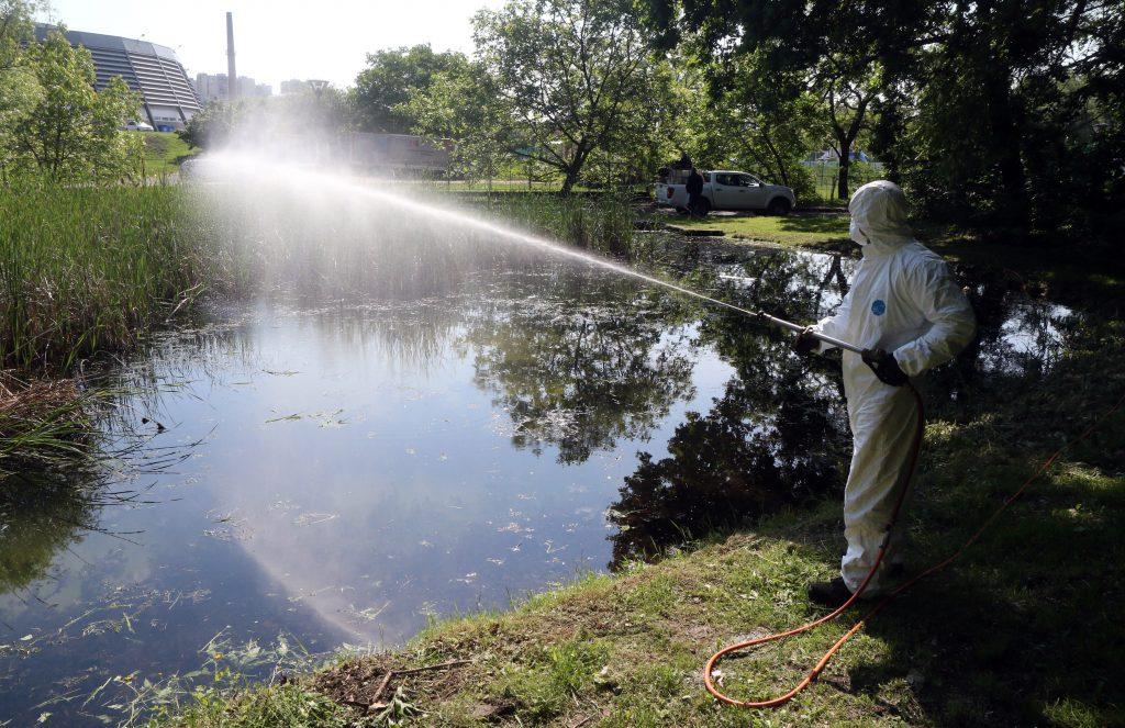 Mückeninvasion in Ungarn post's picture
