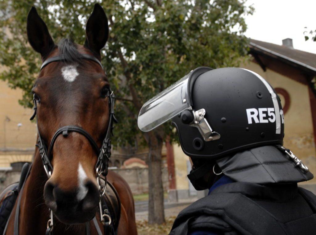 Zwei neue Pferde aus Ungarns Reiterstaffel in Österreich