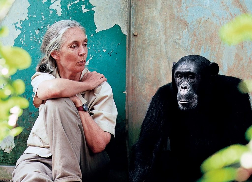 UN-Friedensbotschafterin Jane Goodall besucht das Sziget Festival post's picture