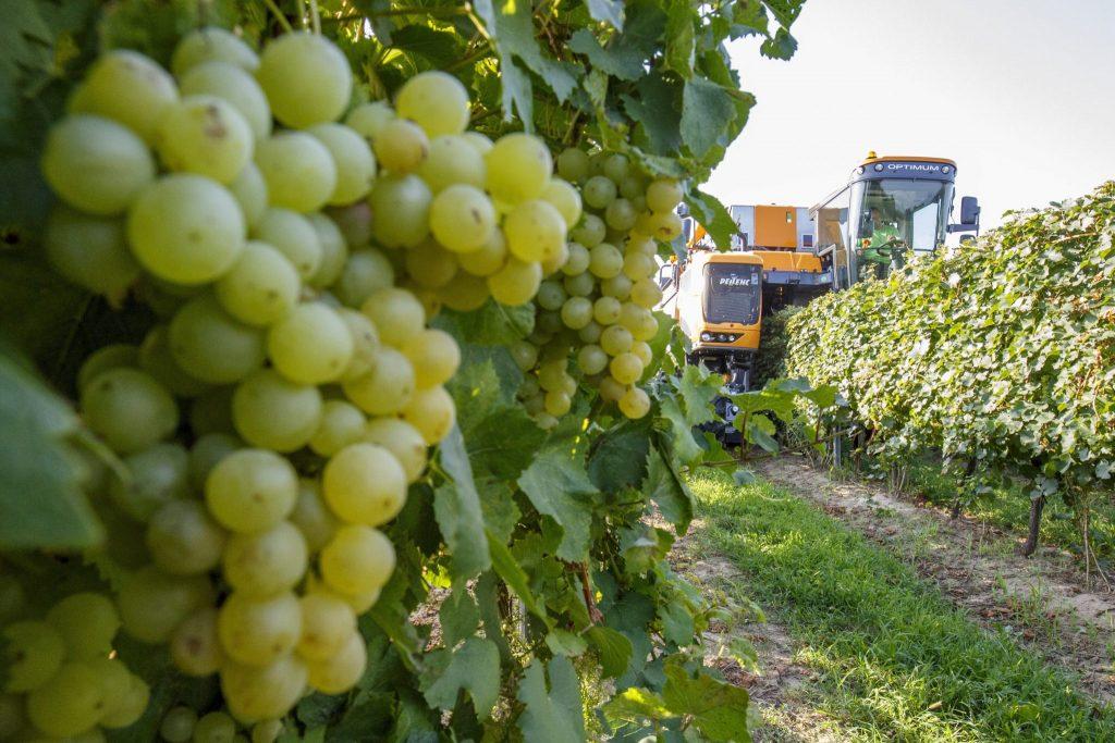Ungarn produziert 3 Mio. Hektoliter Wein