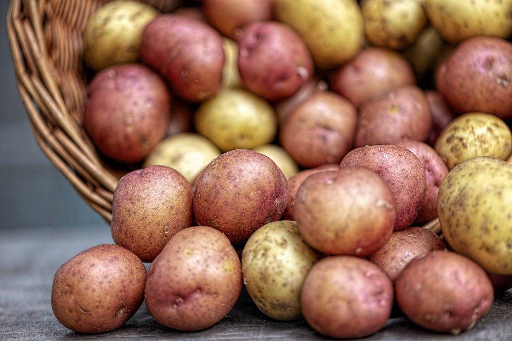 Kartoffelpreise steigen um 190 Prozent