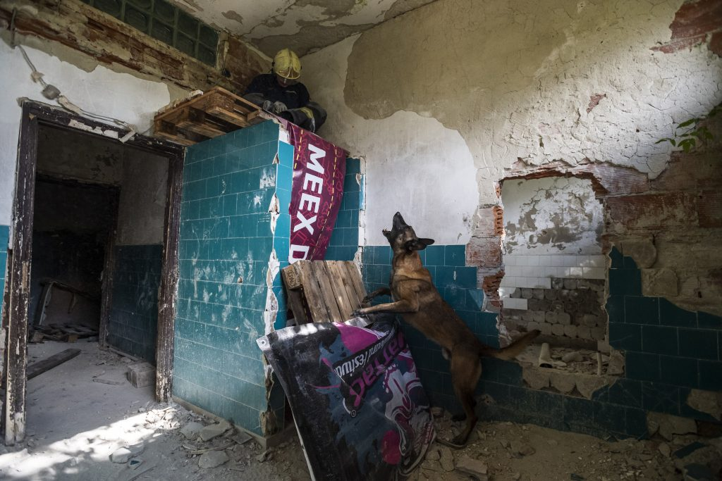 Ungarischer Hund wurde der weltbeste Suchhund!