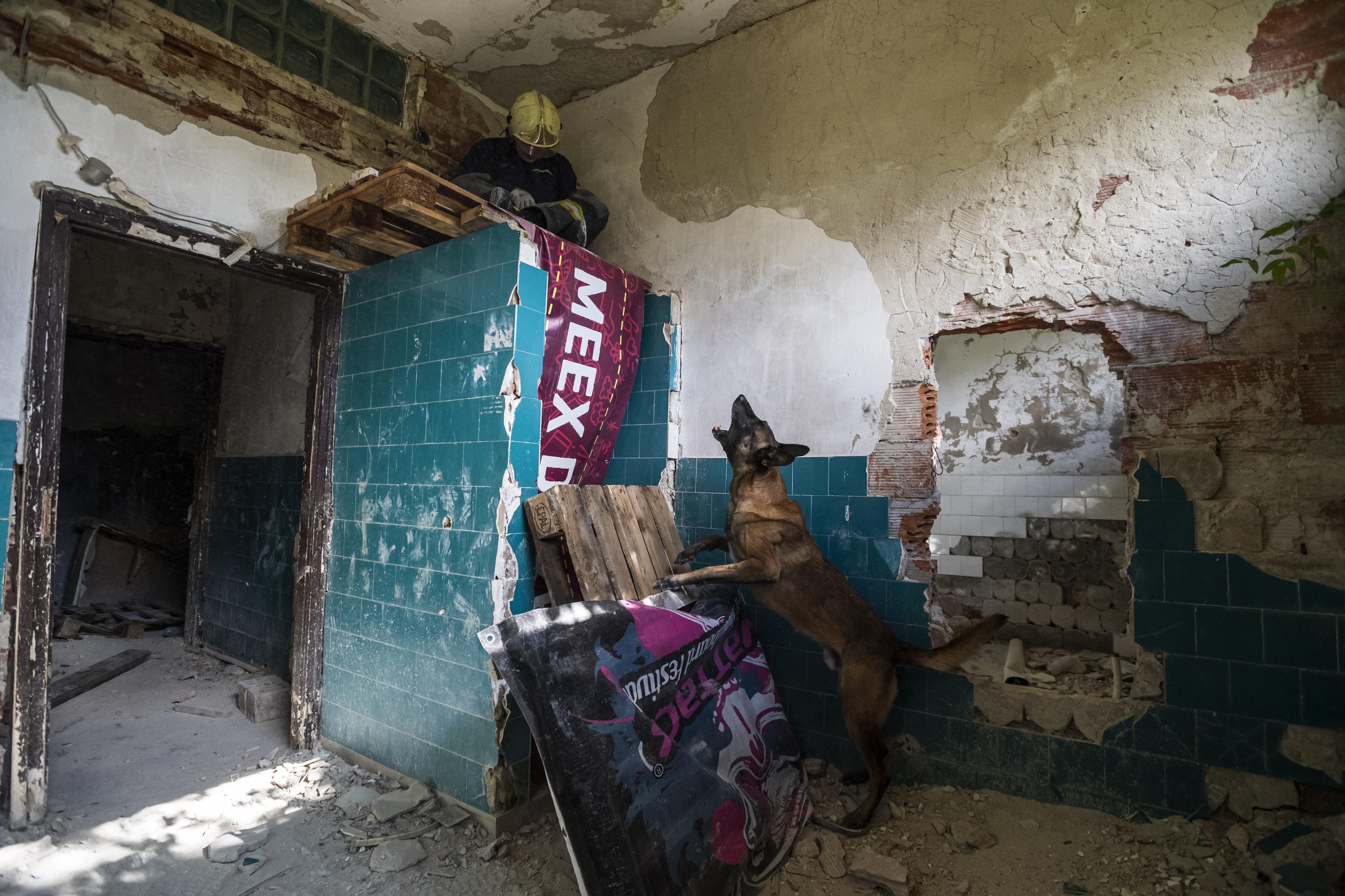 Ungarischer Hund wurde der weltbeste Suchhund! post's picture