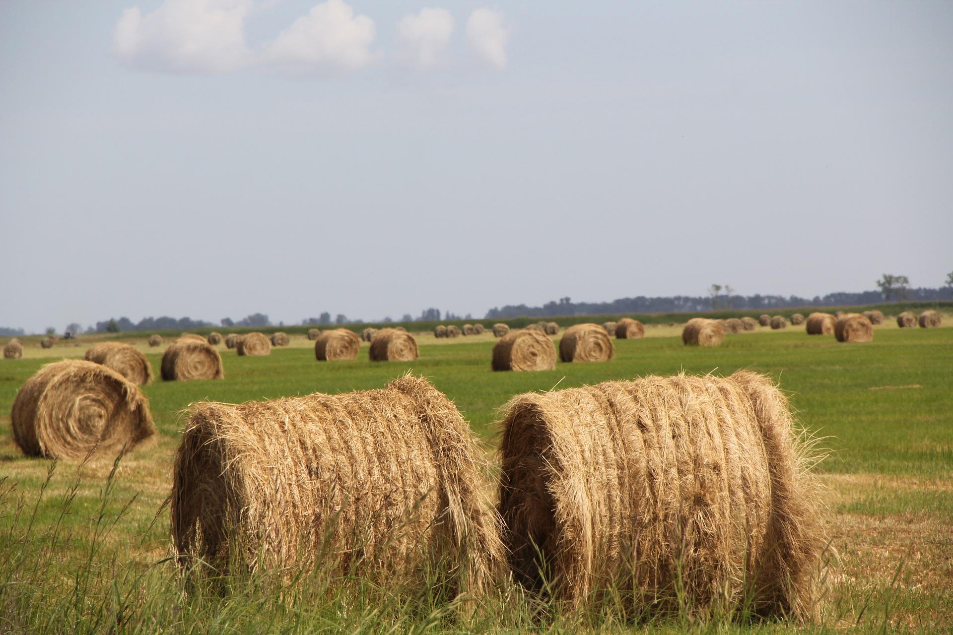 Minister fordert Verbesserung der Effizienz der Agrarproduktion post's picture