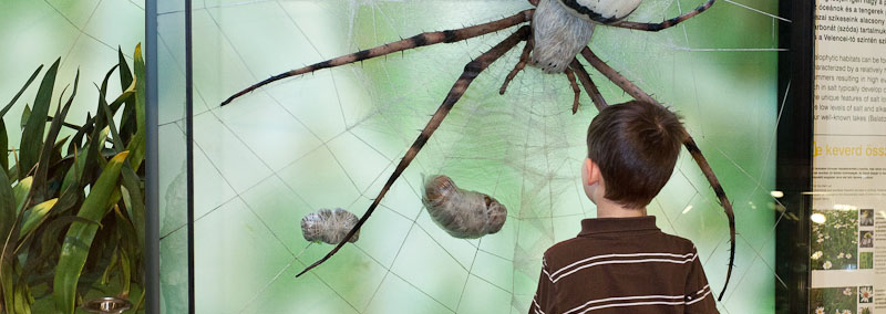 Debrecen begrüßt das Museum für Naturkunde