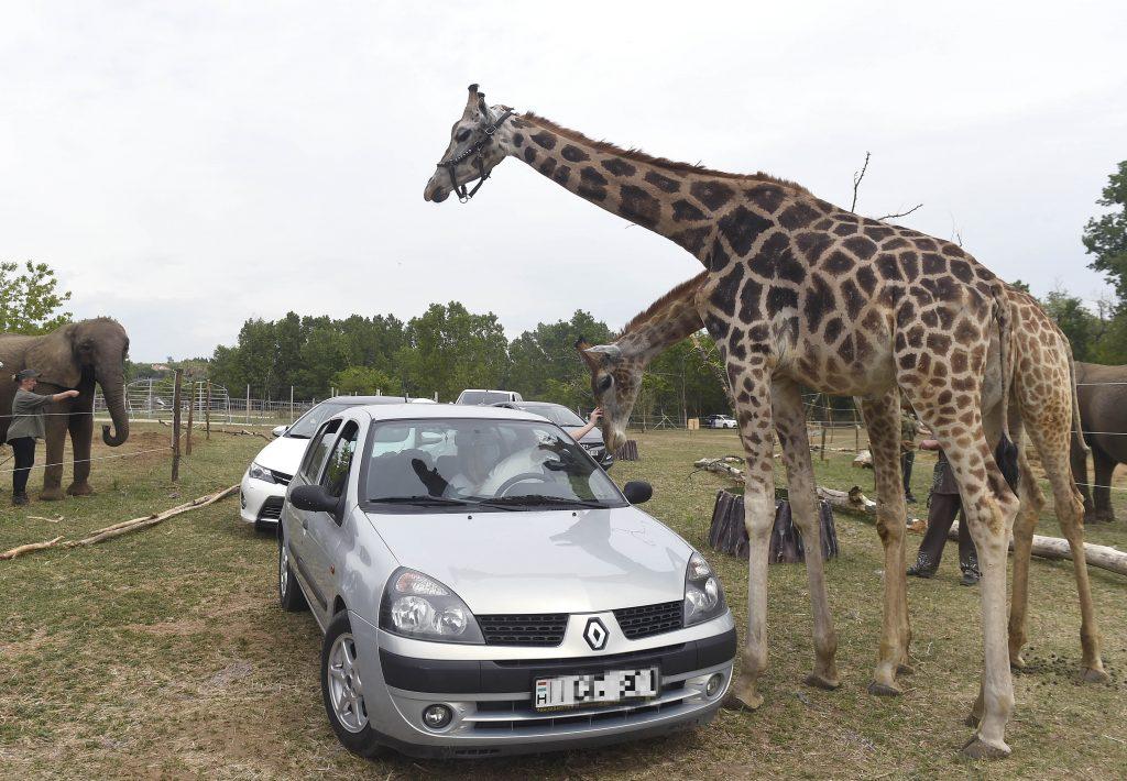 Ungarns erster Safari-Park eröffnet!