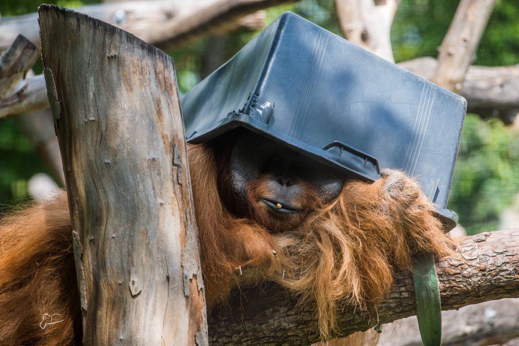Der Zoo Budapest ist 154 Jahre alt