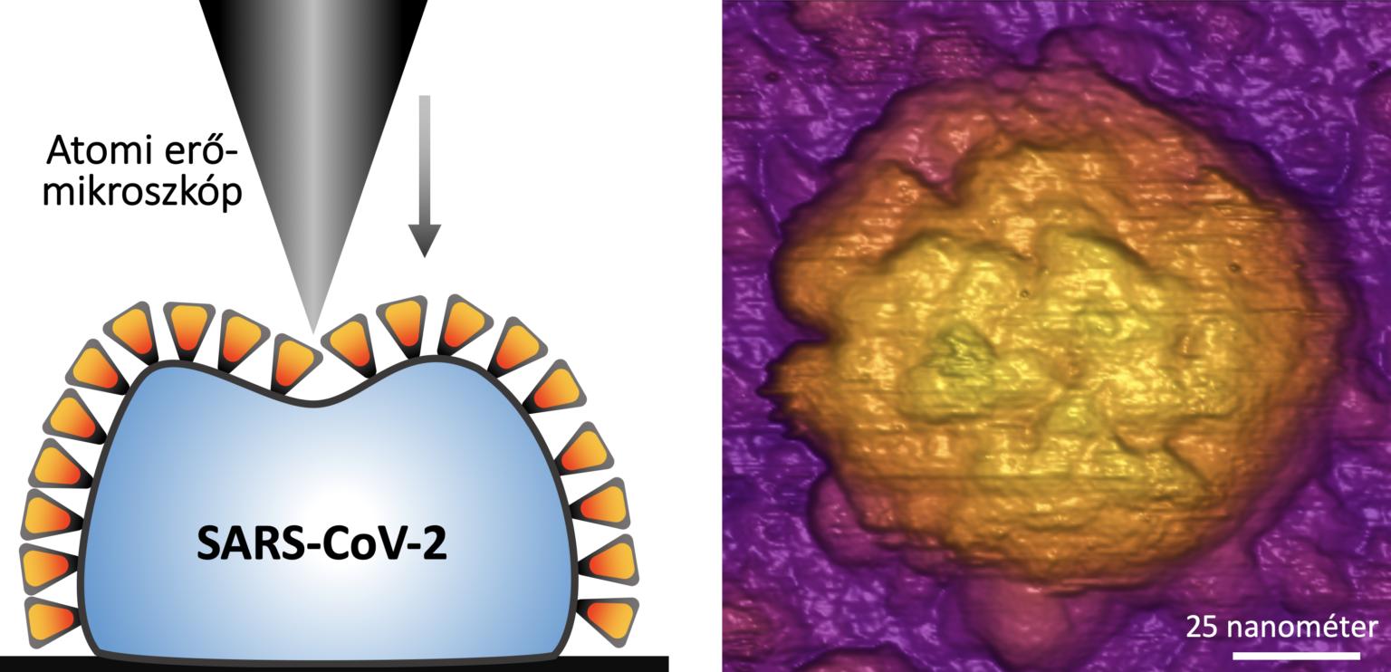 Ist Coronavirus widerstandsfähiger als früher gedacht? post's picture