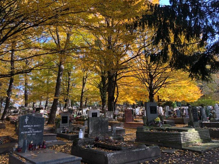 Im November starben 52 Prozent mehr Menschen als zur gleichen Zeit des Vorjahres