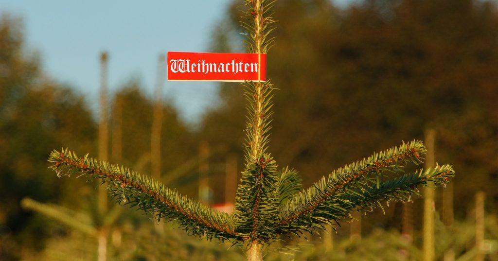 Christbaumverkauf: Händler erwarten mehr Umsatz in diesem Jahr