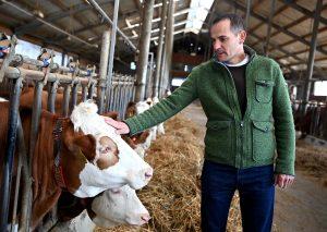 tehén mezőgazdaság