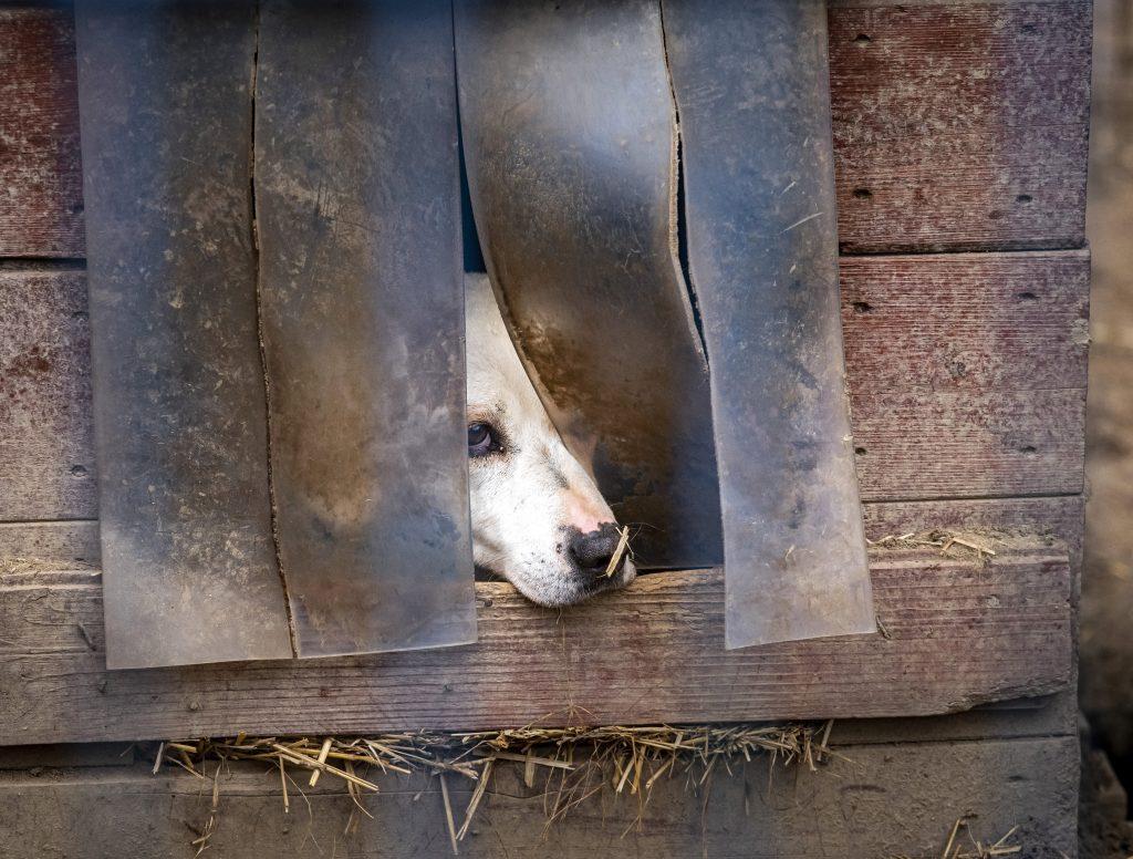 Tierschutz: Orbán ermutigt alle, die Umfrage auszufüllen post's picture