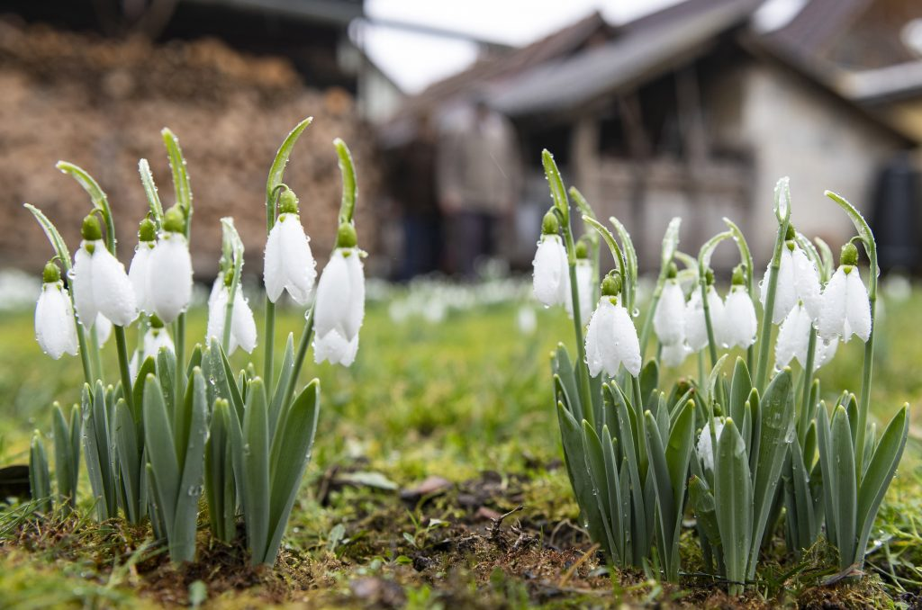 Frühlingswetter wird diese Woche erwartet