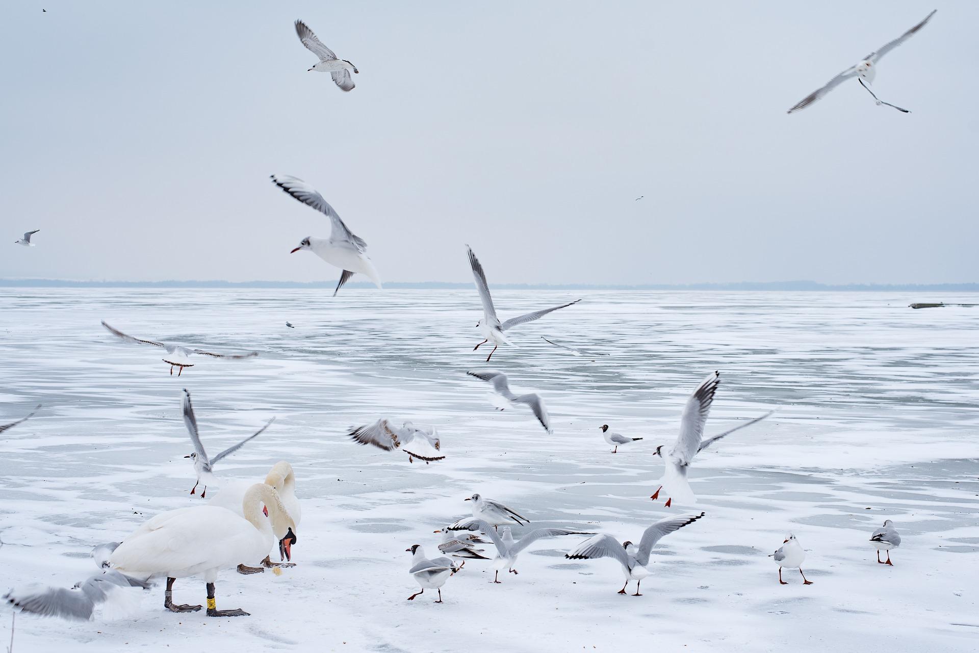 Winter kommt nach Ungarn zurück: Sibirische Kälte ab Donnerstag