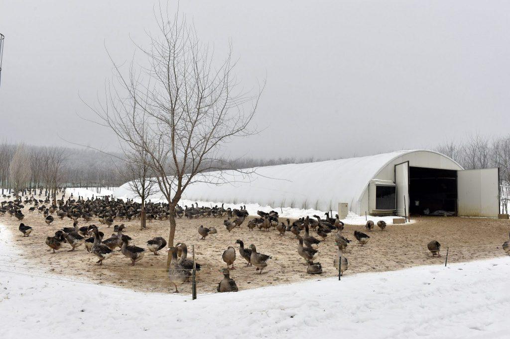 Beschränkungen für die Vogelgrippe in Ungarn aufgehoben