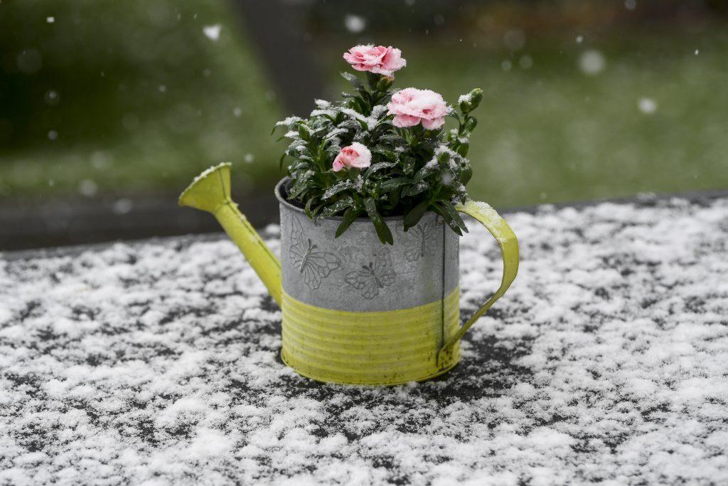 Nach dem Winterwetter kehrt der Frühling zurück! post's picture