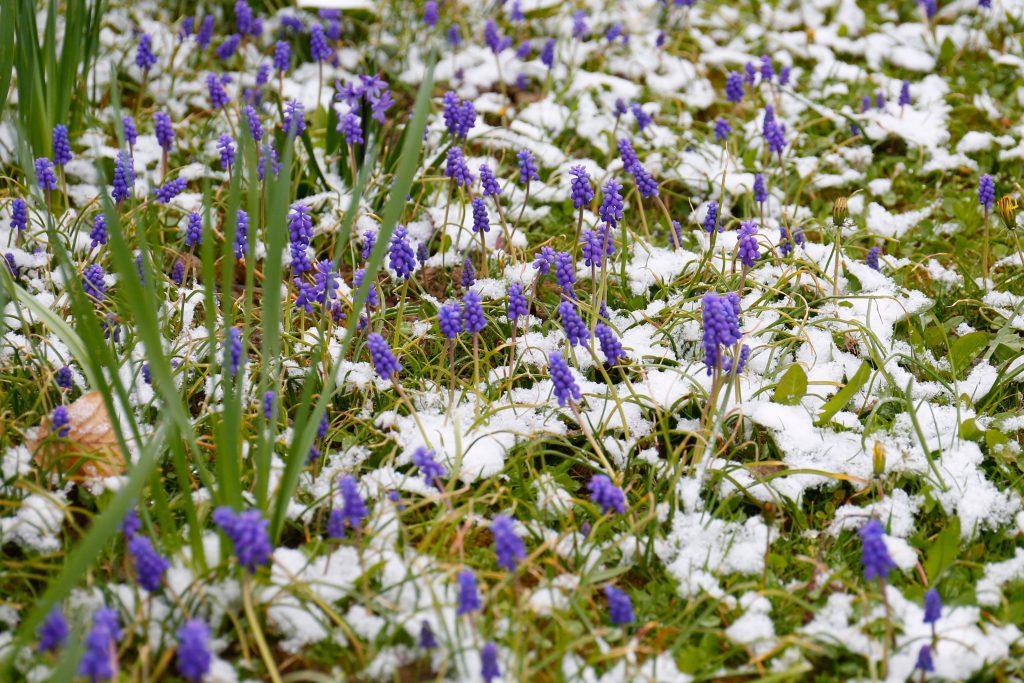 Kälterer Frühling als üblich hinter uns post's picture