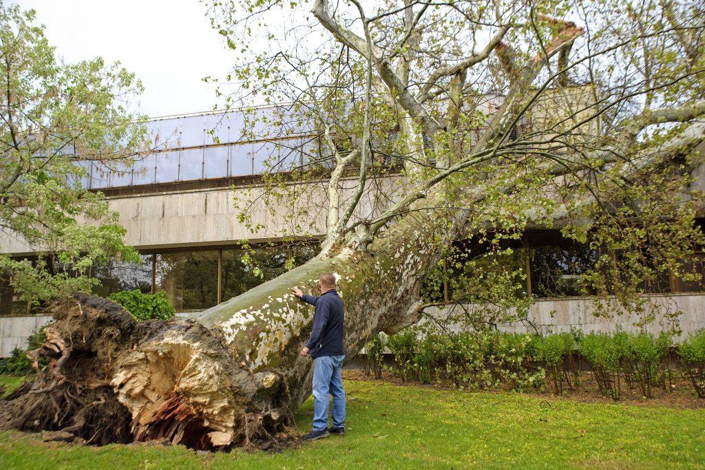 Unwetter am Mittwoch: Umgestürzte Bäume haben große Schäden angerichtet