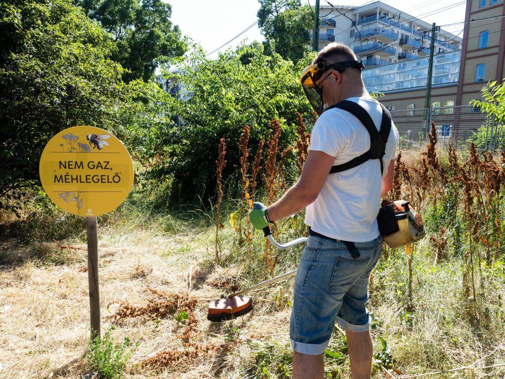 Bienenweide-Debatte in Budapest spitzt sich zu post's picture