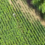 Mit Hilfe von Drohnen wurden Migranten am Plattensee festgenommen