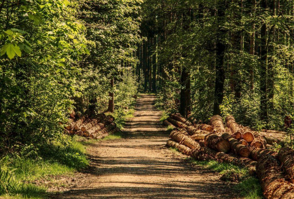 """""""Brüssel würde die Forstwirtschaft unmöglich machen"""" post's picture"""