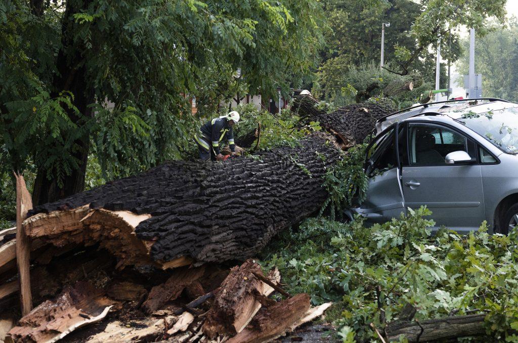 Wetter: Starker Wind hat Bäume umgestürzt und Leitungen gerissen post's picture