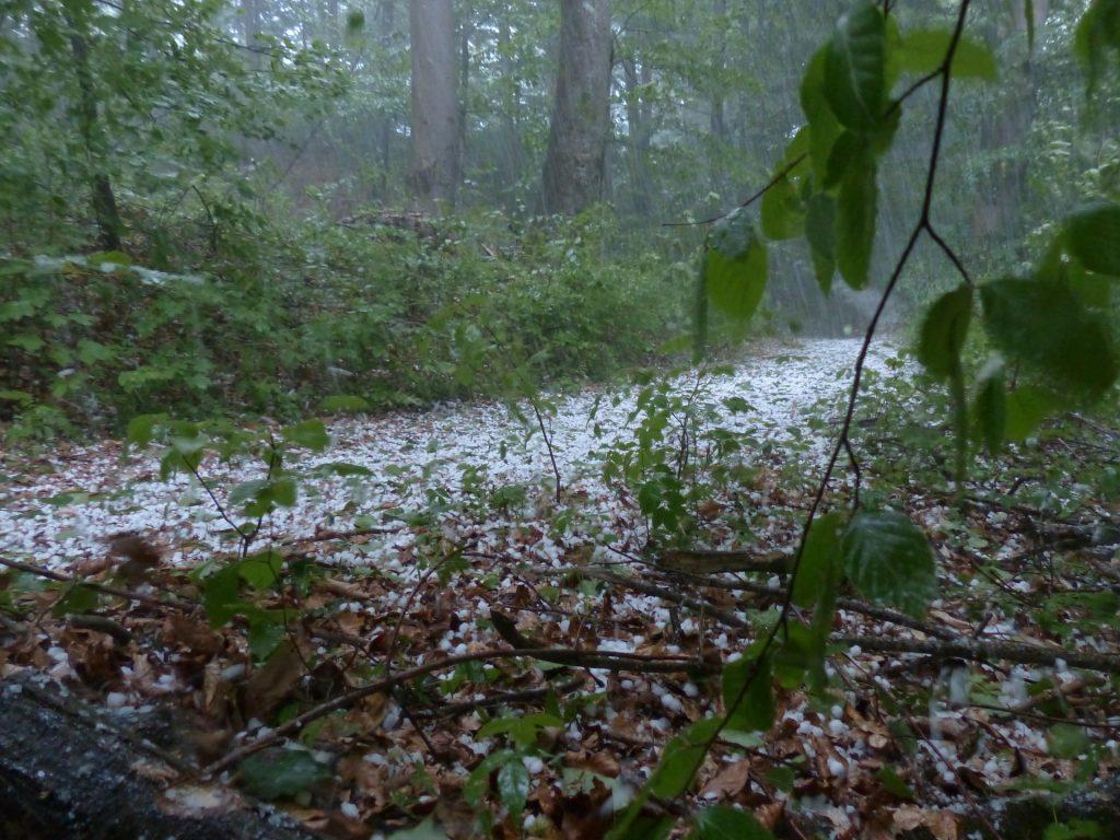 Wetter in der Woche: Sturm, Hagel und Hitze post's picture