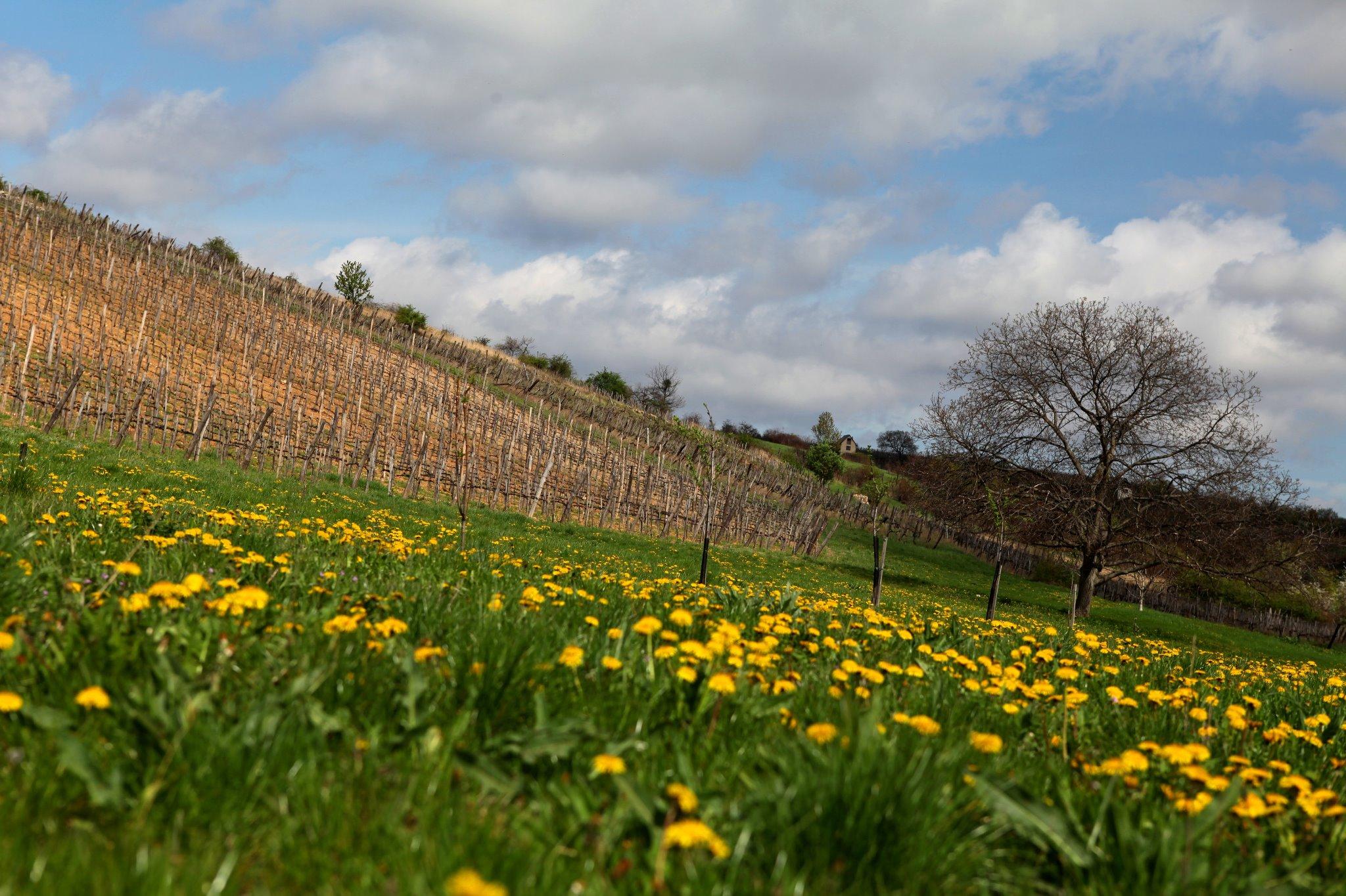 Ungarisches Weingut zum ersten Mal unter den Top 100 der Welt